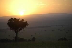 Masai Maran kansallispuisto, Kenia (kuva: Maureen Didde CC-BY)