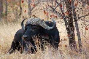 Krugerin kansallispuisto, Etelä-Afrikka