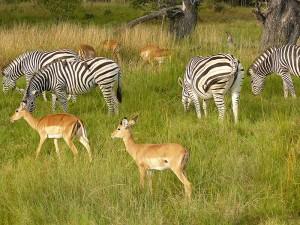 Choben kansallispuisto, Botswana