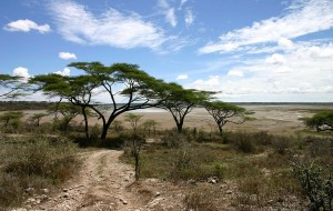 Serengetin kansallispuisto, Tansania (kuva: Charles J Sharp CC-BY)