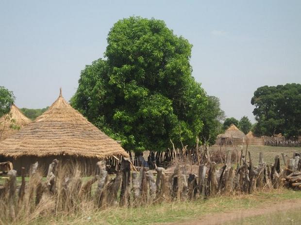 Perinteinen gambialainen kylä majoineen. (kuva: shaunamullally CC-SA)