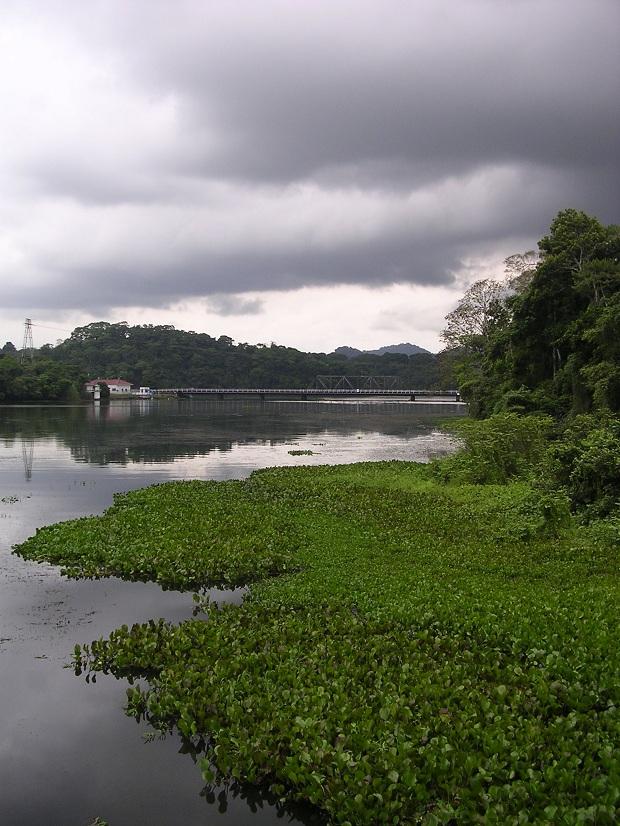 Kauniilla Gamboan sademetsäalueella yöpyminen on unohtumaton elämys. (kuva: Dozenist CC-SA)