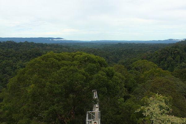 Borneon sademetsä (kuva: Brendan CC-SA)