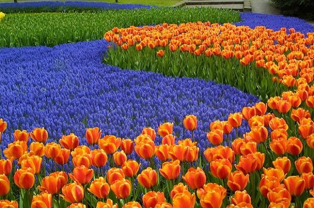 Keukenhof on loistava paikka ottaa varaslähtö kevääseen (Kuva: Lin Mei CC BY 2.0)