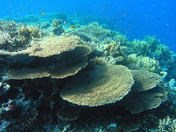 Punaisenmeren koralliriuttia (kuva: Mahmoud Habeeb)