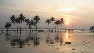 Malediivien kansallispuu on kookospalmu