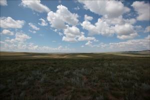 Mongolian loputon aro (Kuva: Ludovic Hirlimann CC BY-SA 2.0)