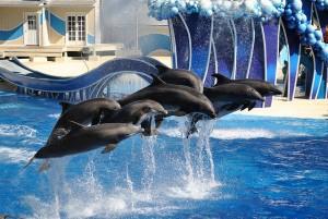 Seaworldin delfiinit (Kuva: Christian Benseler CC BY 2.0)