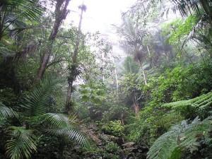El Yunque sademetsä