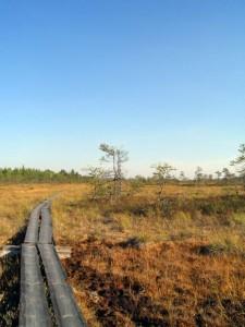 Liikkumista kansallispuistoissa on pyritty helpottamaan muun muassa pitkospuilla. Kuva Valkmusan kansallispuistosta. (CC BY Simop)